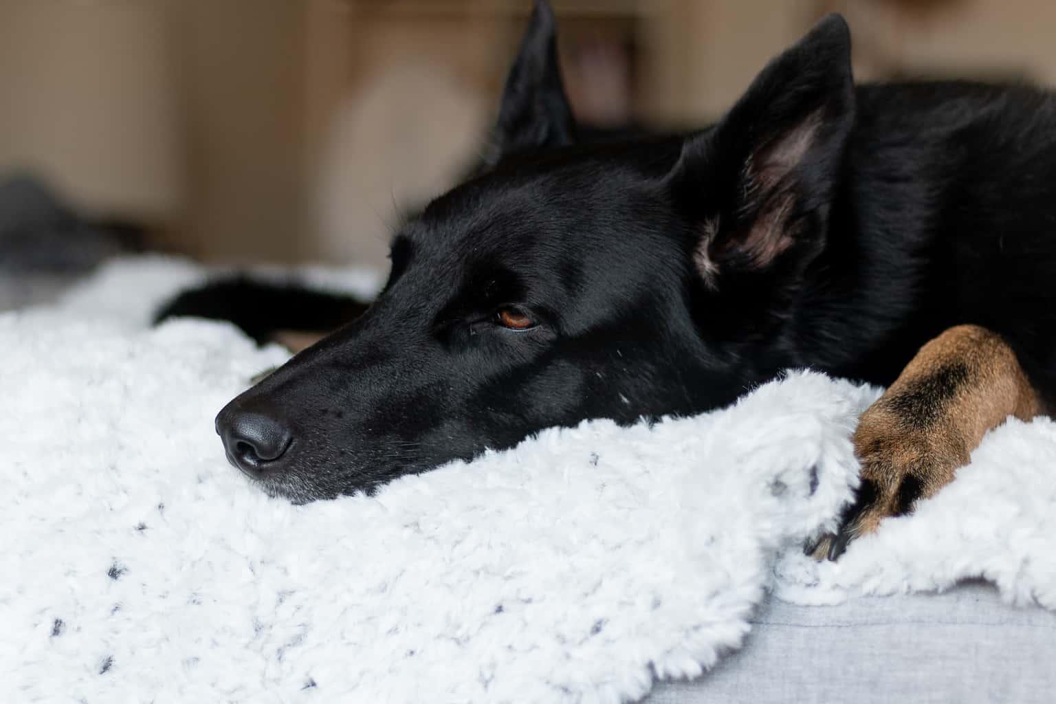 Dog Blanket using Faux Fur Yarn